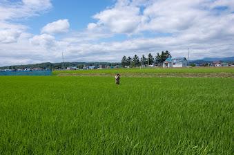 田んぼの中から撮影するアレフ・近藤慶司カメラマン