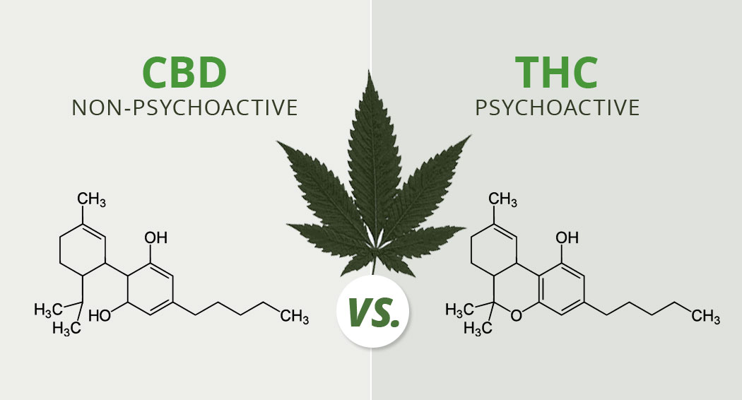 cbd and thc - need to know info