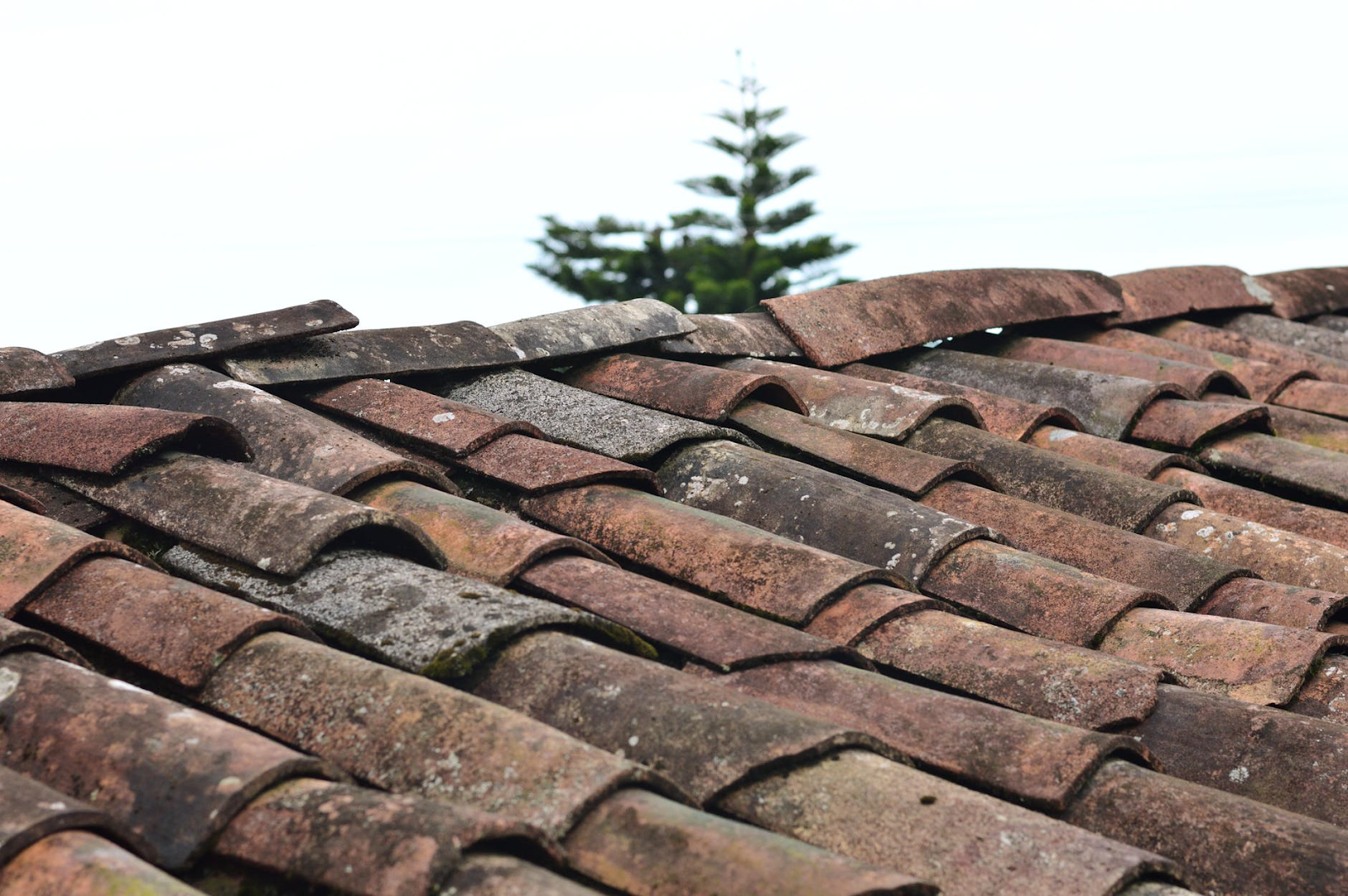 replace your roof to save money