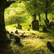 Видеть гроб во сне