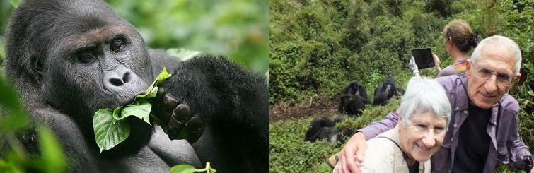Image result for mountain gorillas at Bwindi impenetrable forest