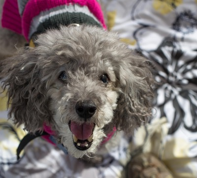 Dog Adoption San Antonio Thanksgiving Day