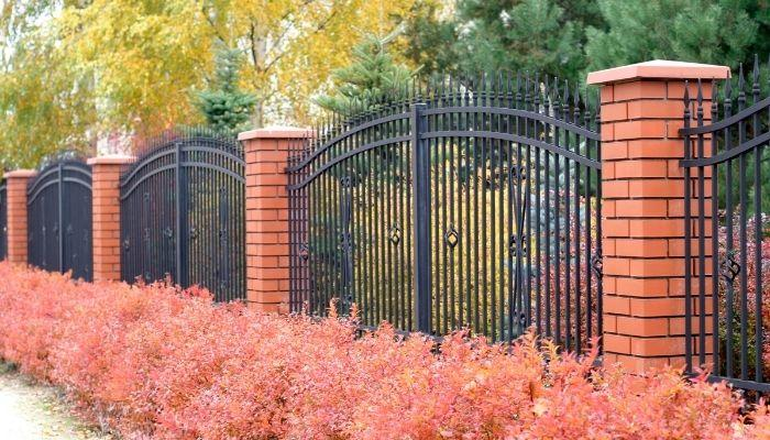Cat Fences