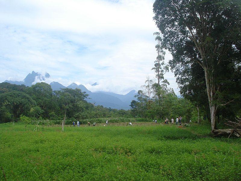File:Colonos implantando uma agrofloresta em Antonina PR - panoramio.jpg