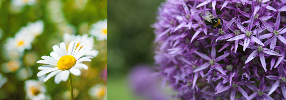 Explore the beautiful gardens in West Devon while on holiday with Devon Farm Holidays.