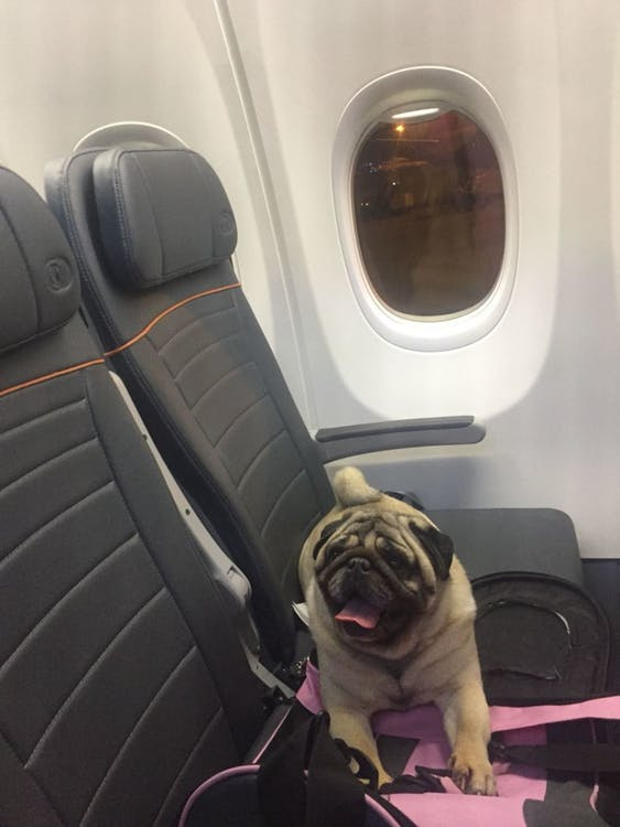 Travel Tips If You're a Plane Passenger with Animal Allergies