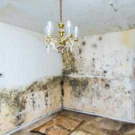mold removal Deerfield Beach.