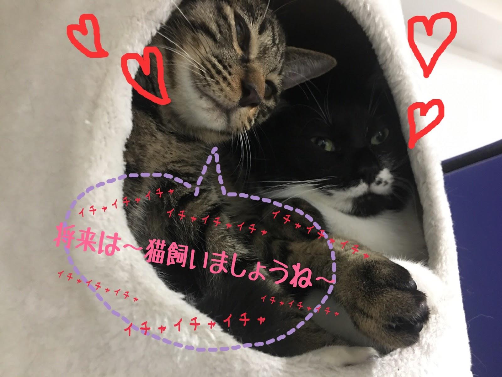 まさかの「猫」が仲介!猫婚活って何?