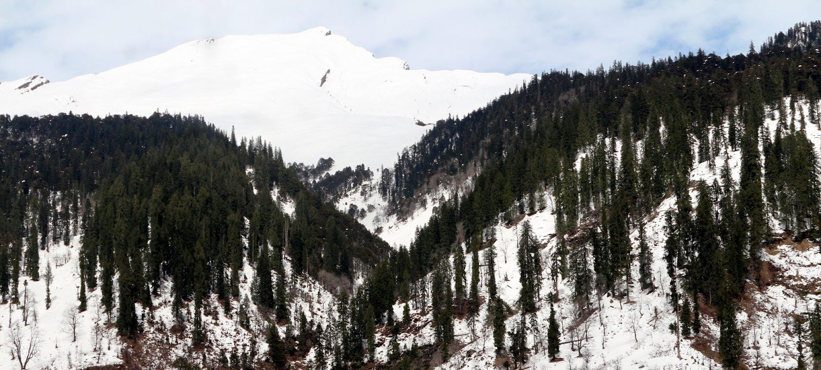 Snow_filled_lands_with_trees_of_dhauladhar_mountain_range_2.jpg