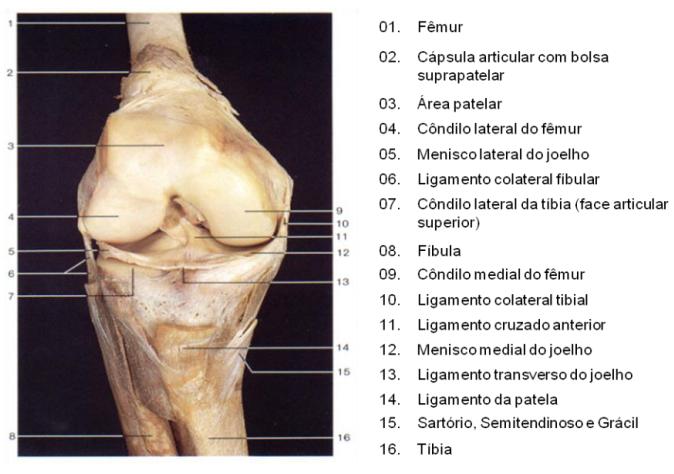 Ligamentos do joelho