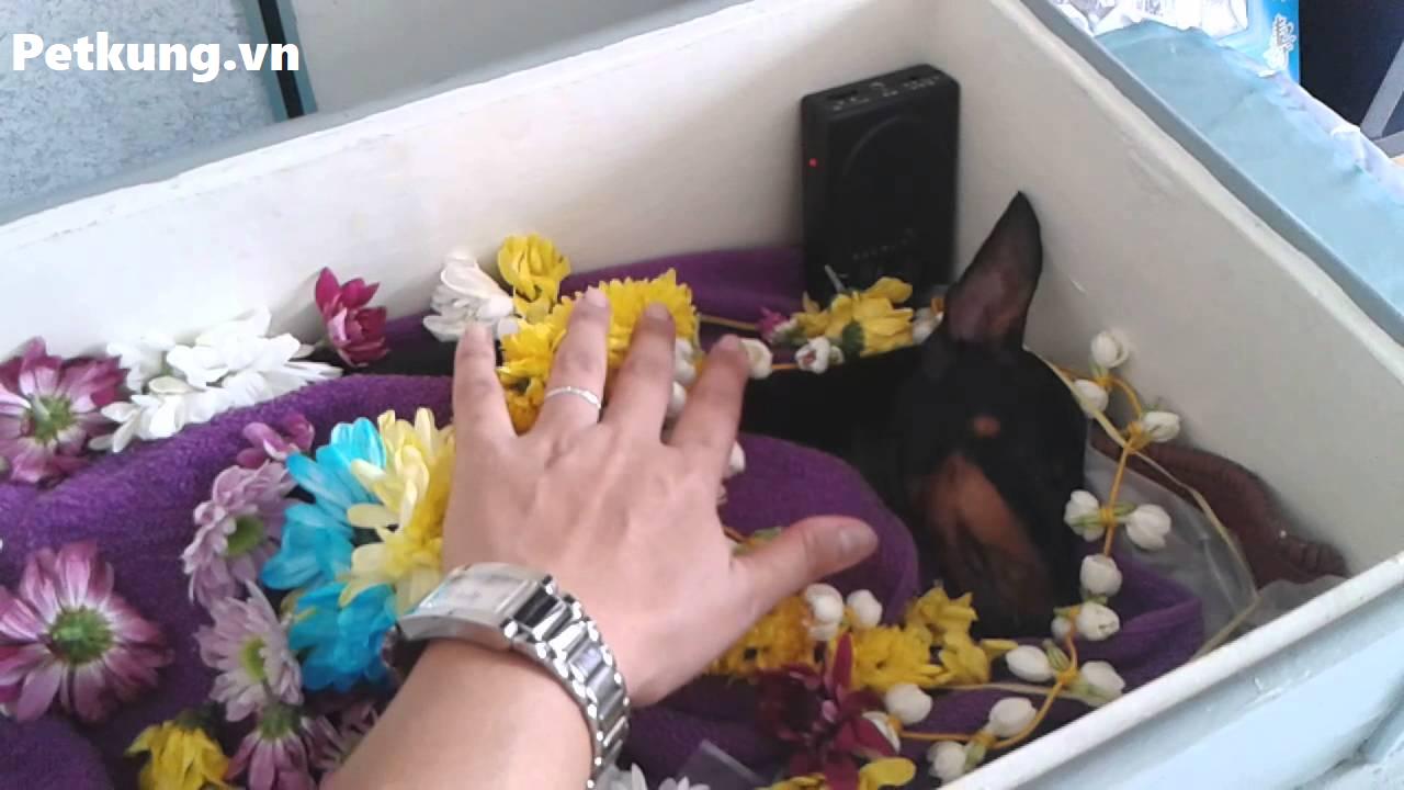 kiêng chôn chó