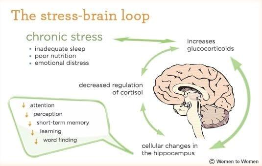 How stress affects the brain