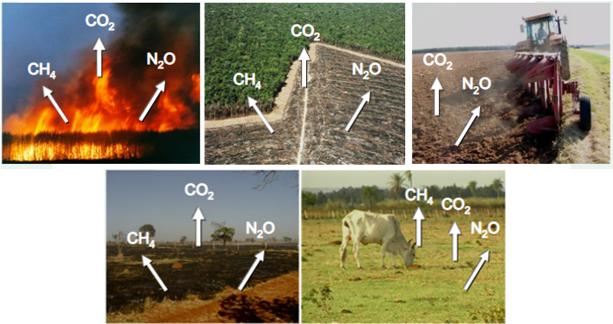 Principais fontes de emissão de gases na agropecuária (Fonte: Embrapa), o que demonstra a importância da adoção de uma agricultura de baixo carbono