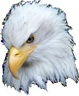eaglehead.png