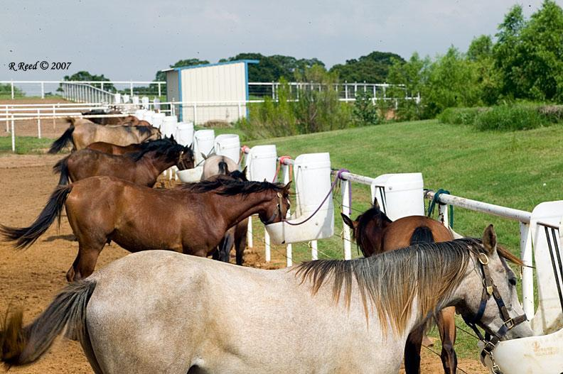 Equine Feeding Management: The How & When of Feeding Horses | Animal & Food  Sciences