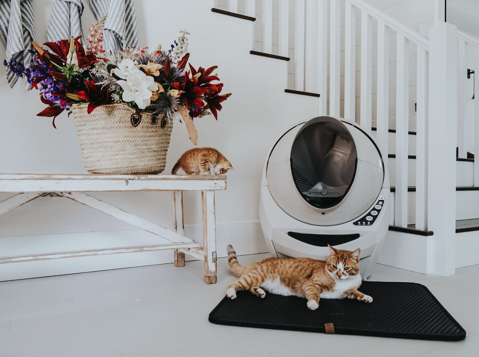 litter box problems in older cats