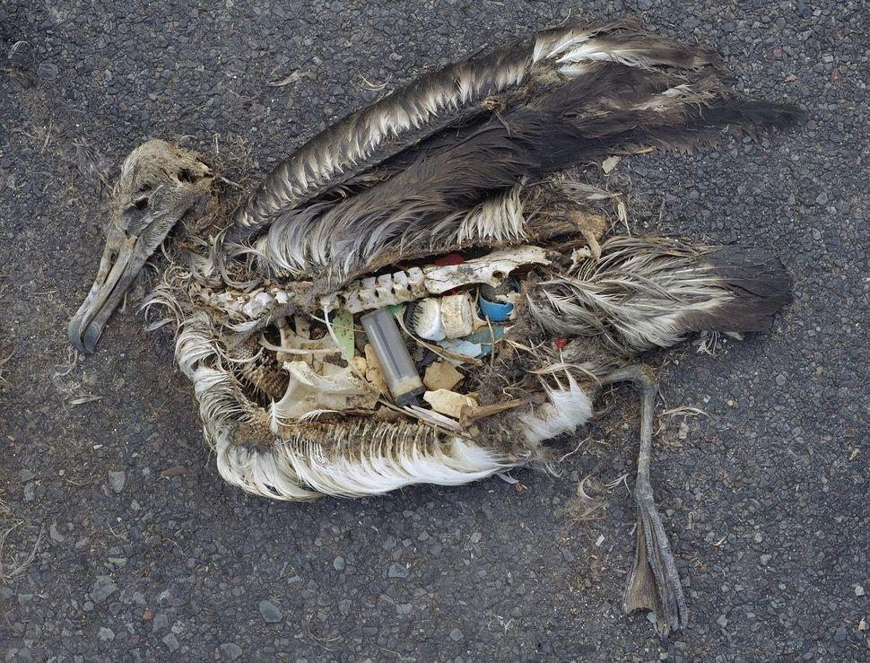 Plastikowe odpady sprawcą śmierci ptaków