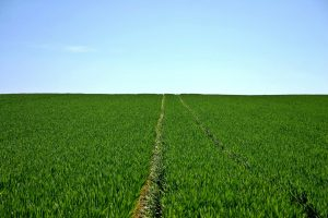 How do selective herbicides work?