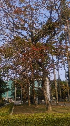 D:\台南女中\照片\047大花紫薇樹列.jpg