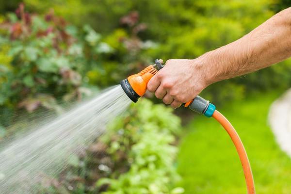 Садовый жасмин потребует регулярного полива