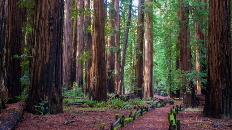 Image result for richardson grove