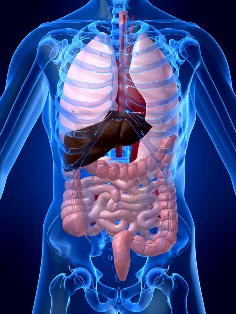 sistema-digestivo.jpg