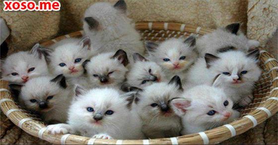 Nằm mơ thấy mèo con và những điềm báo