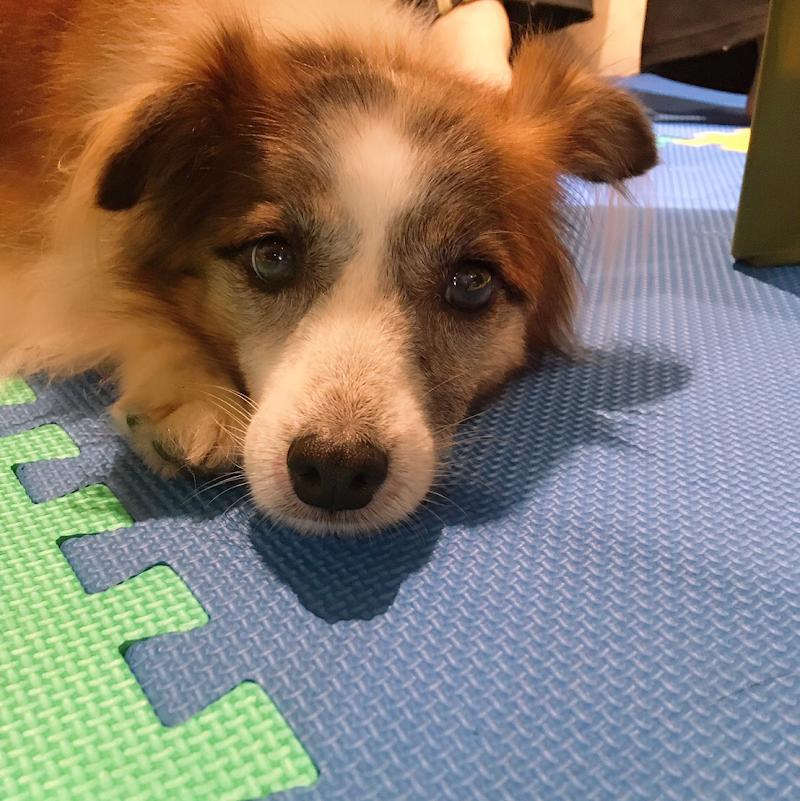 犬カフェ ワンダフル