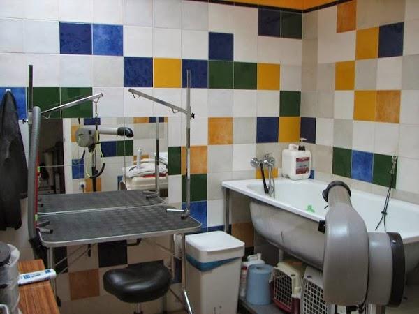 Centro Veterinario Bormujos II