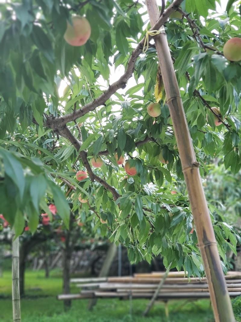 園 紺野 果樹