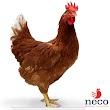 Neco Ortadoğu Tavukculuk San. Tic. Ltd. Şti.