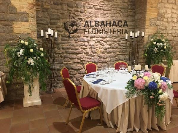 FLORISTERIA ALBAHACA