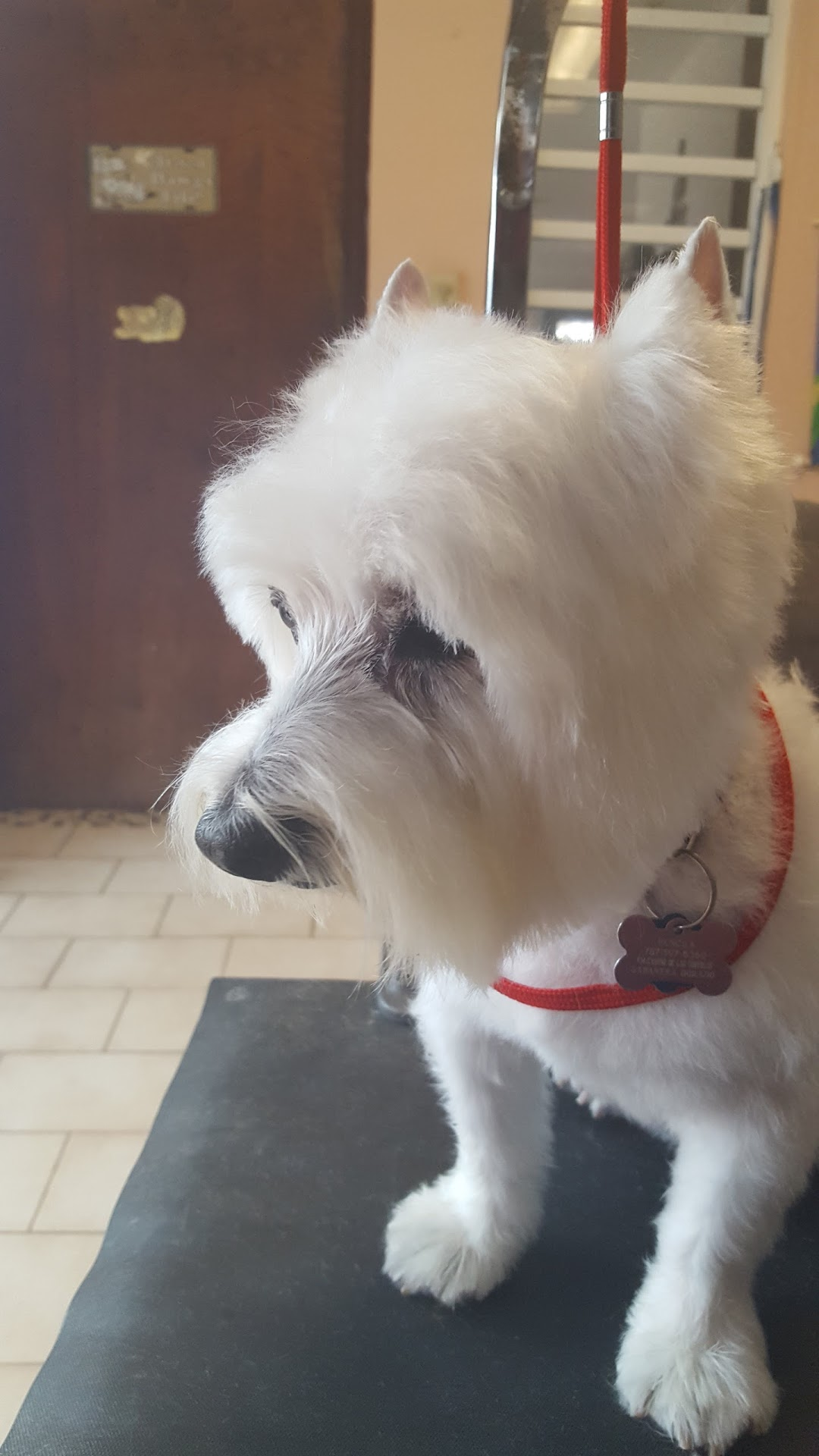 Lilys Grooming Salon All Breeds