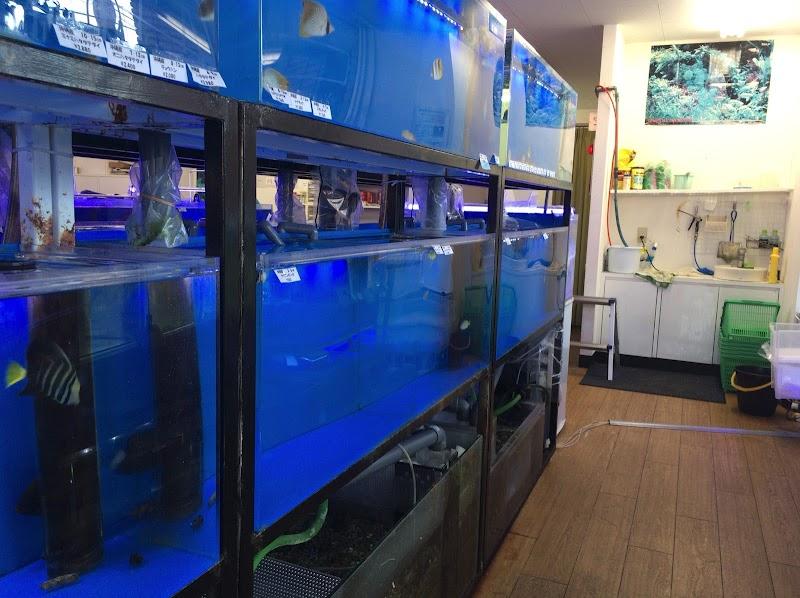 ショップ 海水 魚 海水魚、熱帯魚のネット通販のアクアマリン