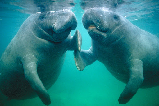 Tourist Attraction «Nature Coast Manatee Tours», reviews and photos, 7283 W Lincoln Ln, Homosassa, FL 34448, USA