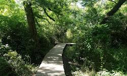 Lake Creek Preserve