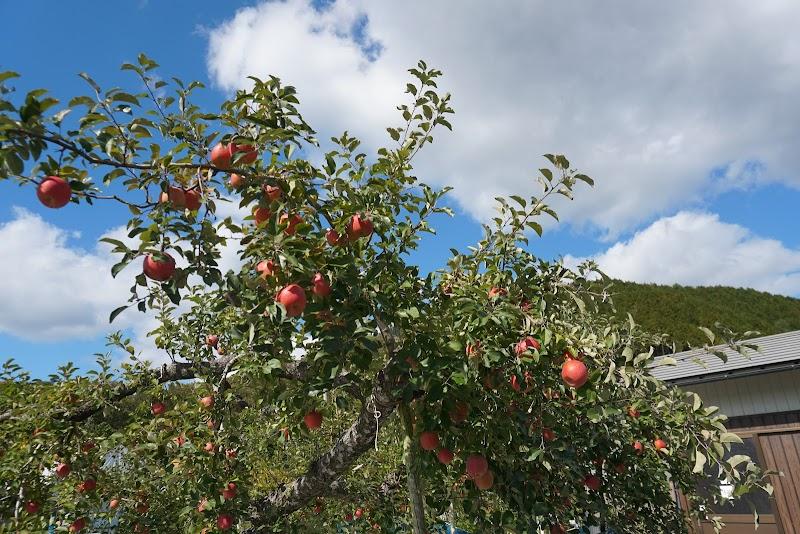 園 徳佐 りんご 三浦りんご園
