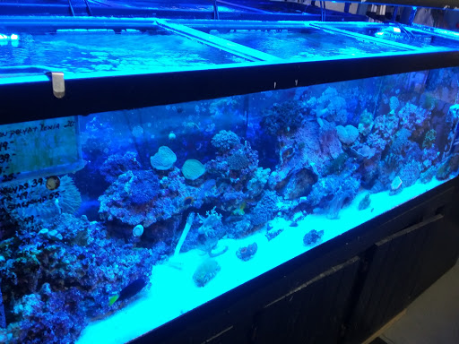 Tropical Fish Store «Top Hat Aquarium», reviews and photos, 18710 SW 107th Ave, Cutler Bay, FL 33157, USA