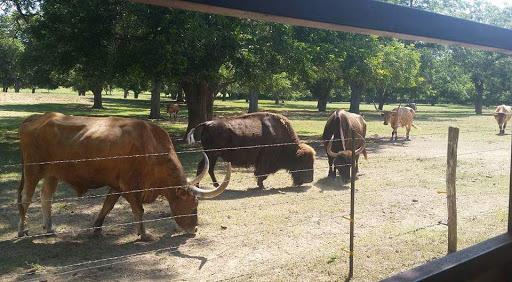 Ranch «Rio Cibolo Ranch», reviews and photos, 1101 Ulrich Rd, Marion, TX 78124, USA