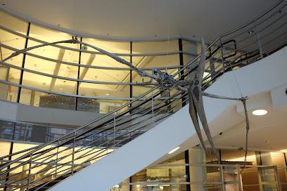 Museum of Vertebrate Zoology