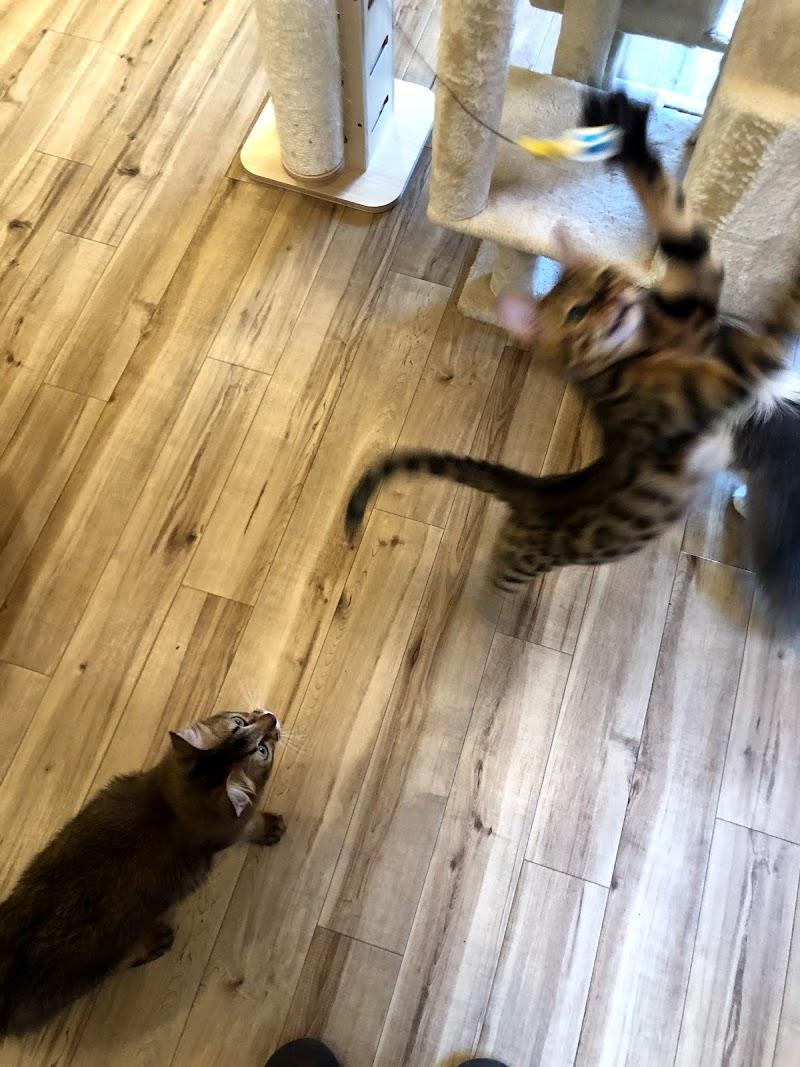 猫カフェ nyao nyao