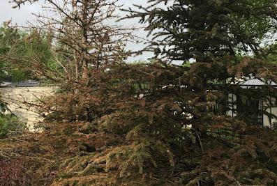 Big Rock Premium Landscaping and Design