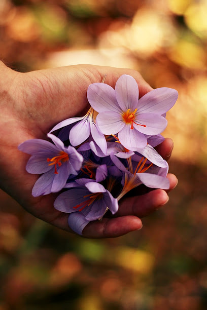 imagen de masajista Masaje Yoguico - Healing Hands - Mallorca