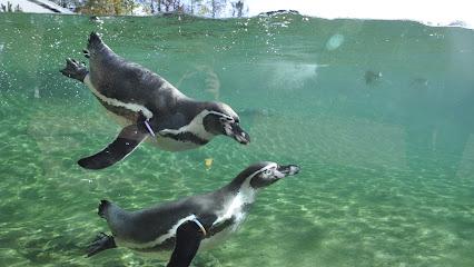 Rostock Zoo