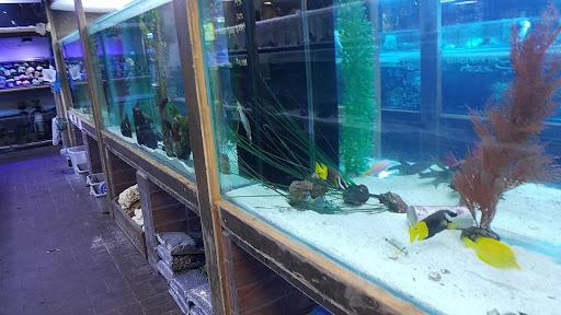 Aquarium Shop «Exotic Aquariums», reviews and photos, 7399 Bird Rd, Miami, FL 33155, USA