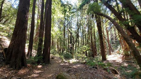Portola Valley, CA Homes For Sale