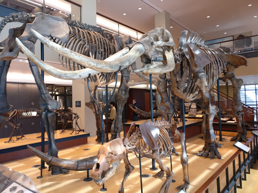 Museum «Beneski Museum of Natural History», reviews and photos, 11 Barrett Hill Rd, Amherst, MA 01002, USA
