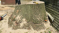 Everything about Tree Experts