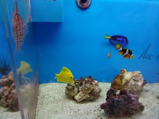 Pet Store «Ultimate Aquarium», reviews and photos, 217 W Main St, Visalia, CA 93291, USA