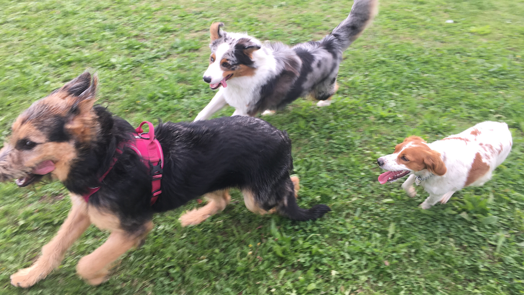 Asilo per cani Dogs College
